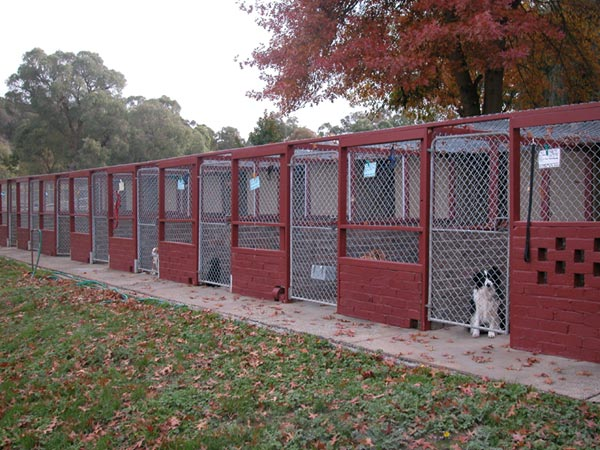 The kennels alpha boarding kennels for Building dog kennels for breeding